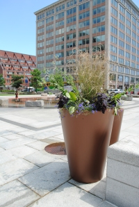Container gardens near the hardscaped plaza of the Rings Fountain