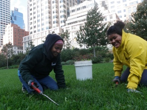 Diana and Asha removing broad-leaf weeds from the lawns in the Fort Point Channel Parks