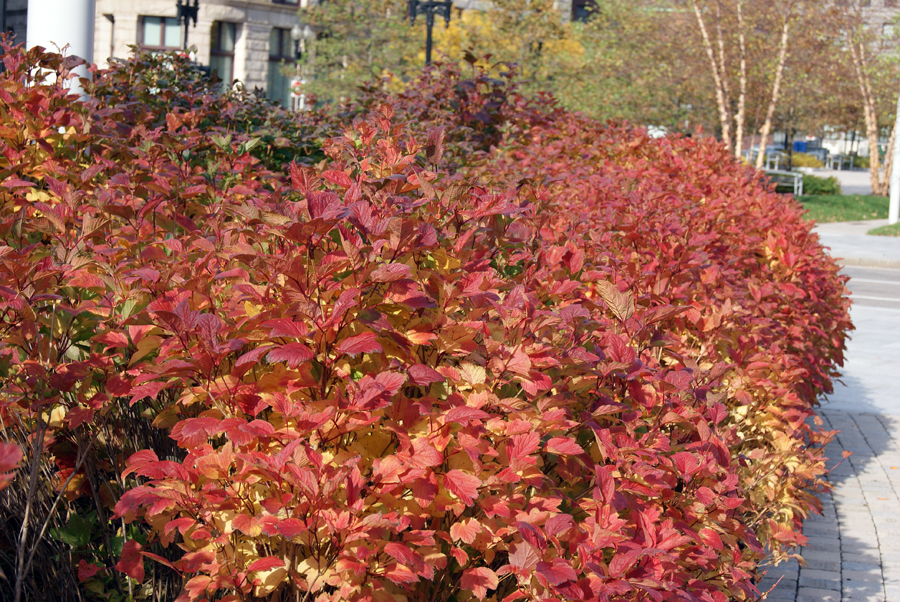 fall color | Life on the Greenway